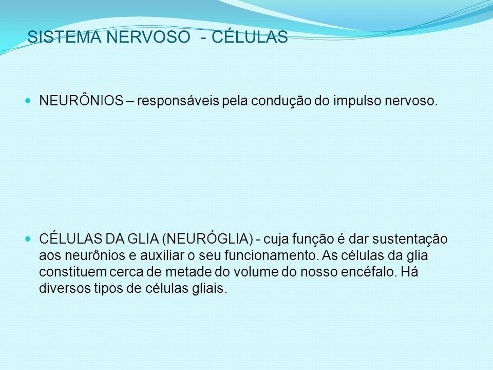 SISTEMA NERVOSO - CÉLULAS NEURÔNIOS – responsáveis pela condução do impulso nervoso.