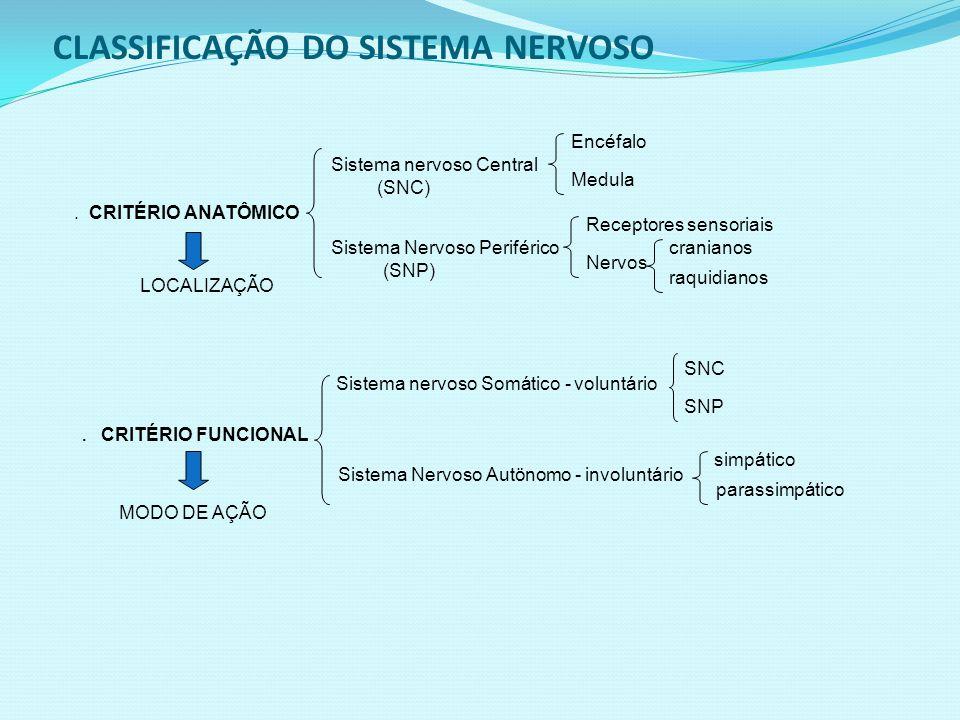 CLASSIFICAÇÃO DO SISTEMA NERVOSO.