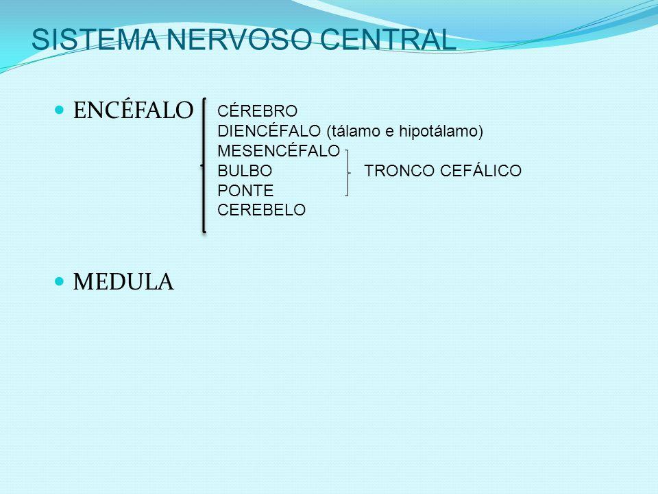 SISTEMA NERVOSO CENTRAL ENCÉFALO MEDULA CÉREBRO DIENCÉFALO (tálamo e hipotálamo) MESENCÉFALO BULBO TRONCO CEFÁLICO PONTE CEREBELO