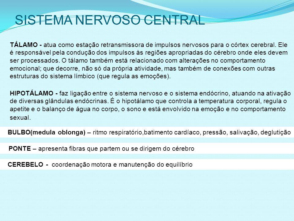 SISTEMA NERVOSO CENTRAL TÁLAMO - atua como estação retransmissora de impulsos nervosos para o córtex cerebral.