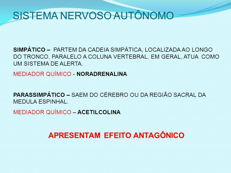 SISTEMA NERVOSO AUTÔNOMO SIMPÁTICO – PARTEM DA CADEIA SIMPÁTICA, LOCALIZADA AO LONGO DO TRONCO, PARALELO A COLUNA VERTEBRAL.