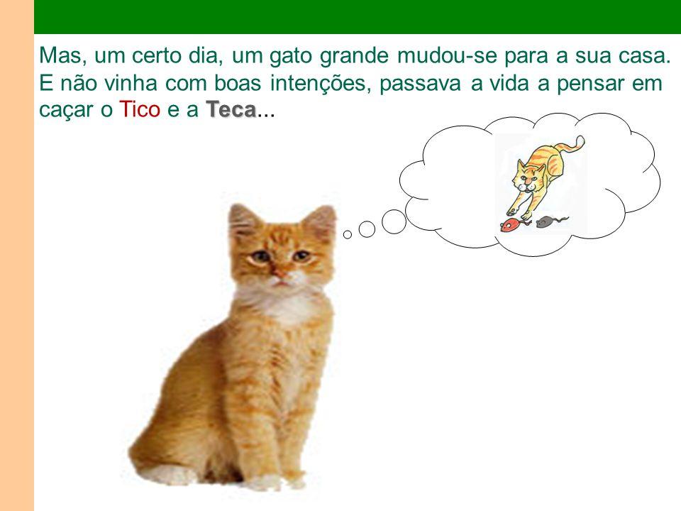 Teca Mas, um certo dia, um gato grande mudou-se para a sua casa.