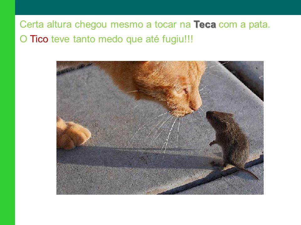Teca Certa altura chegou mesmo a tocar na Teca com a pata. O Tico teve tanto medo que até fugiu!!!