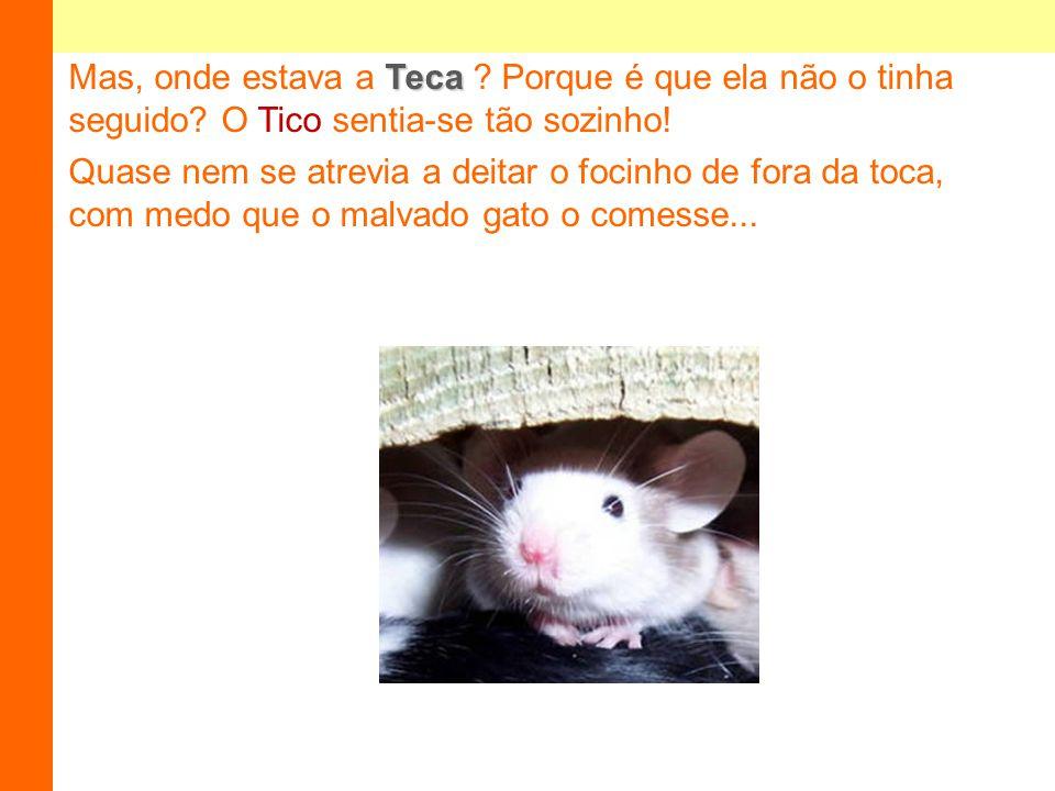Teca Mas, onde estava a Teca .Porque é que ela não o tinha seguido.