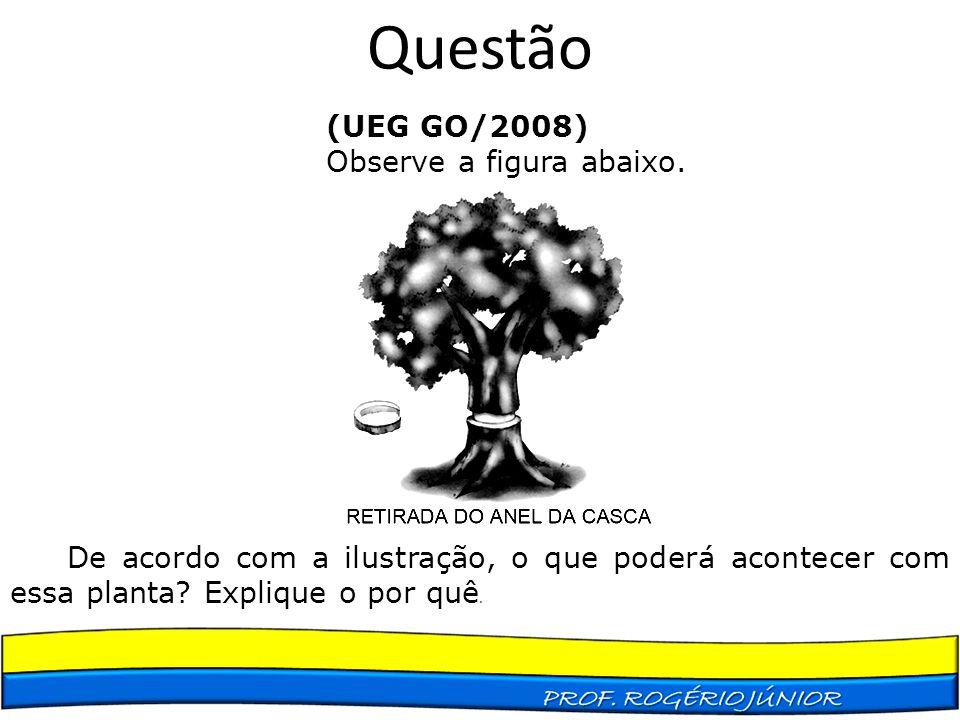 Questão (UEG GO/2008) Observe a figura abaixo. De acordo com a ilustração, o que poderá acontecer com essa planta? Explique o por quê.
