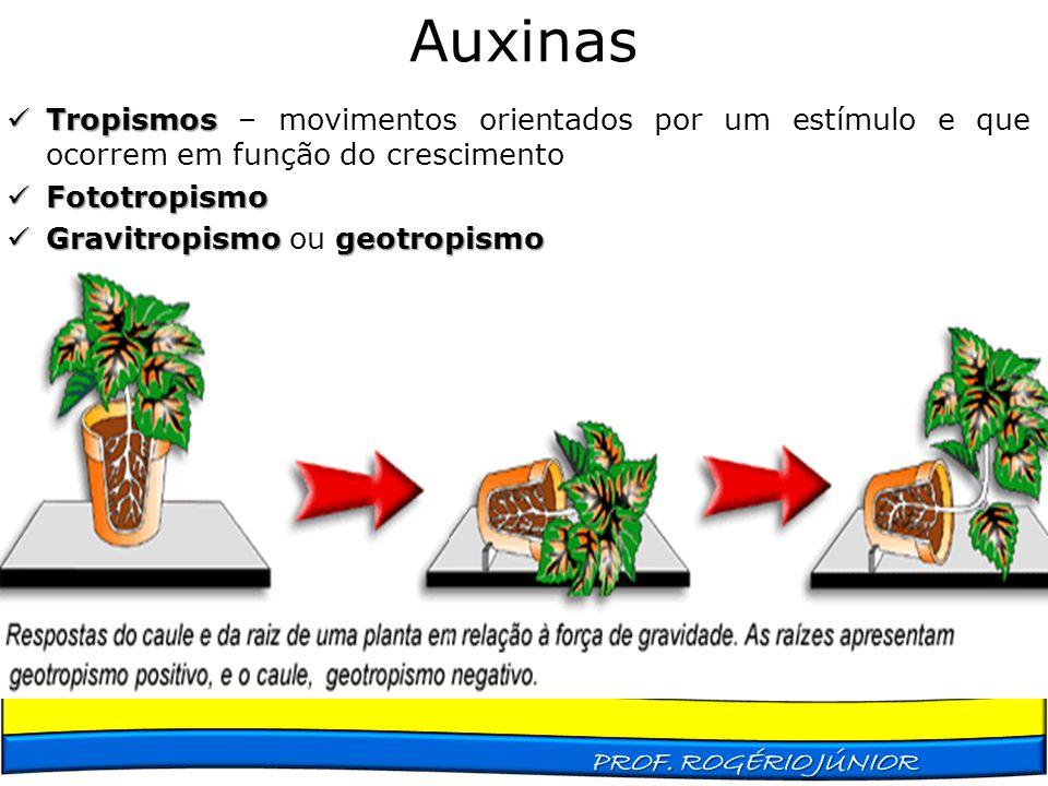 Auxinas Tropismos Tropismos – movimentos orientados por um estímulo e que ocorrem em função do crescimento Fototropismo Fototropismo Gravitropismogeot