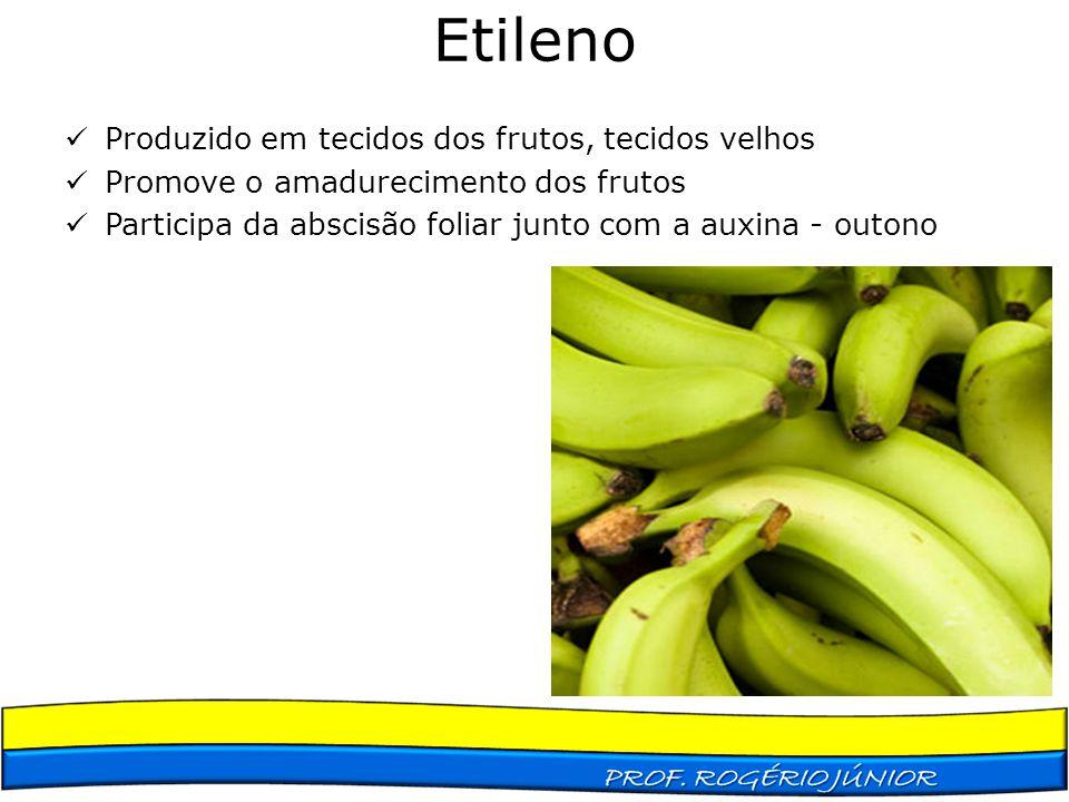 Etileno Produzido em tecidos dos frutos, tecidos velhos Promove o amadurecimento dos frutos Participa da abscisão foliar junto com a auxina - outono