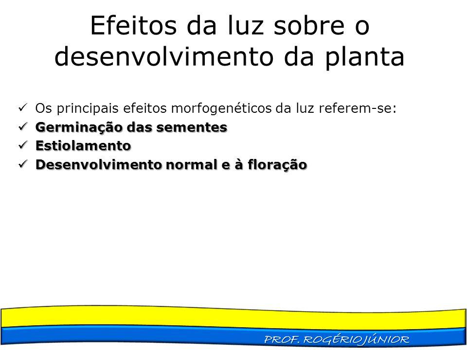 Efeitos da luz sobre o desenvolvimento da planta Os principais efeitos morfogenéticos da luz referem-se: Germinação das sementes Germinação das sement