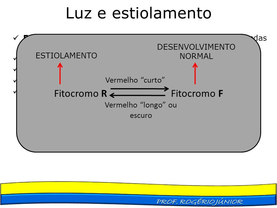 Luz e estiolamento Estiolamento Estiolamento – é o conjunto das características apresentadas por uma planta que se desenvolve no escuro Ausência de cl