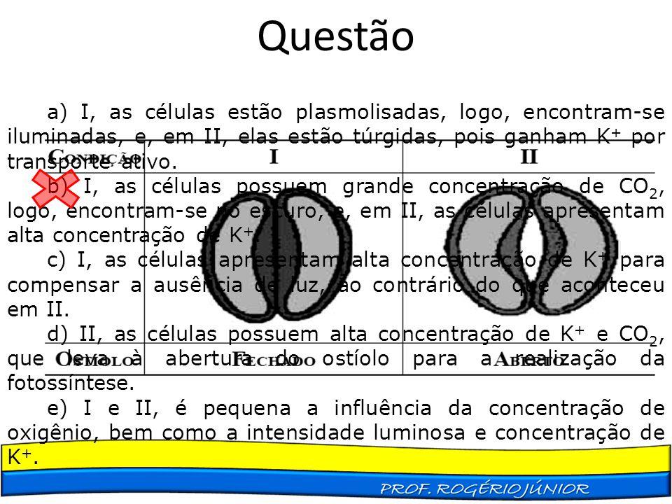 Questão a) I, as células estão plasmolisadas, logo, encontram-se iluminadas, e, em II, elas estão túrgidas, pois ganham K + por transporte ativo. b) I