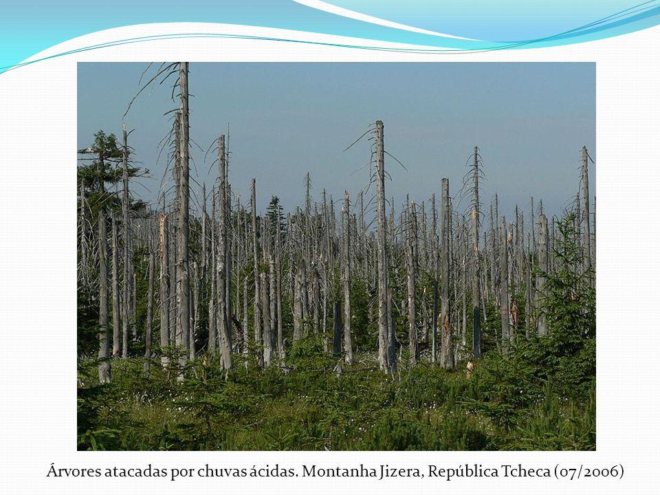 Árvores atacadas por chuvas ácidas. Montanha Jizera, República Tcheca (07/2006)