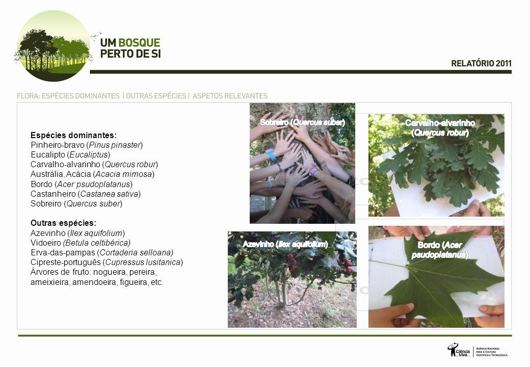 Espécies dominantes: Pinheiro-bravo (Pinus pinaster) Eucalipto (Eucaliptus) Carvalho-alvarinho (Quercus robur) Austrália, Acácia (Acacia mimosa) Bordo