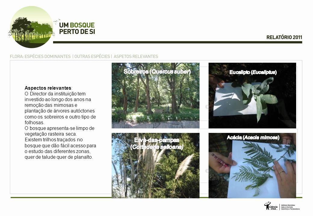 Aspectos relevantes: O Director da instituição tem investido ao longo dos anos na remoção das mimosas e plantação de árvores autóctones como os sobrei