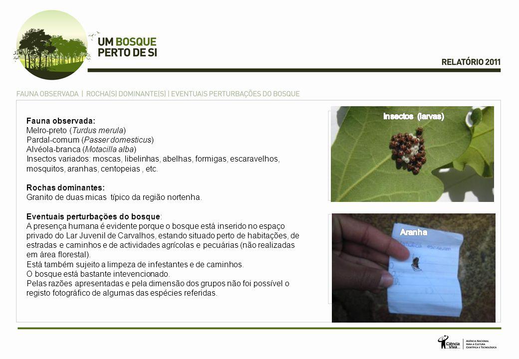 Fauna observada: Melro-preto (Turdus merula) Pardal-comum (Passer domesticus) Alvéola-branca (Motacilla alba) Insectos variados: moscas, libelinhas, abelhas, formigas, escaravelhos, mosquitos, aranhas, centopeias, etc.