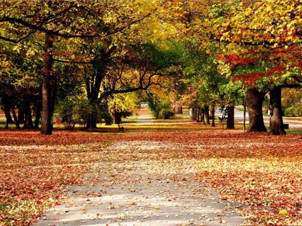 Reuniões Especializadas de Tratamento Espiritual Reuniões Especializadas de Tratamento Espiritual