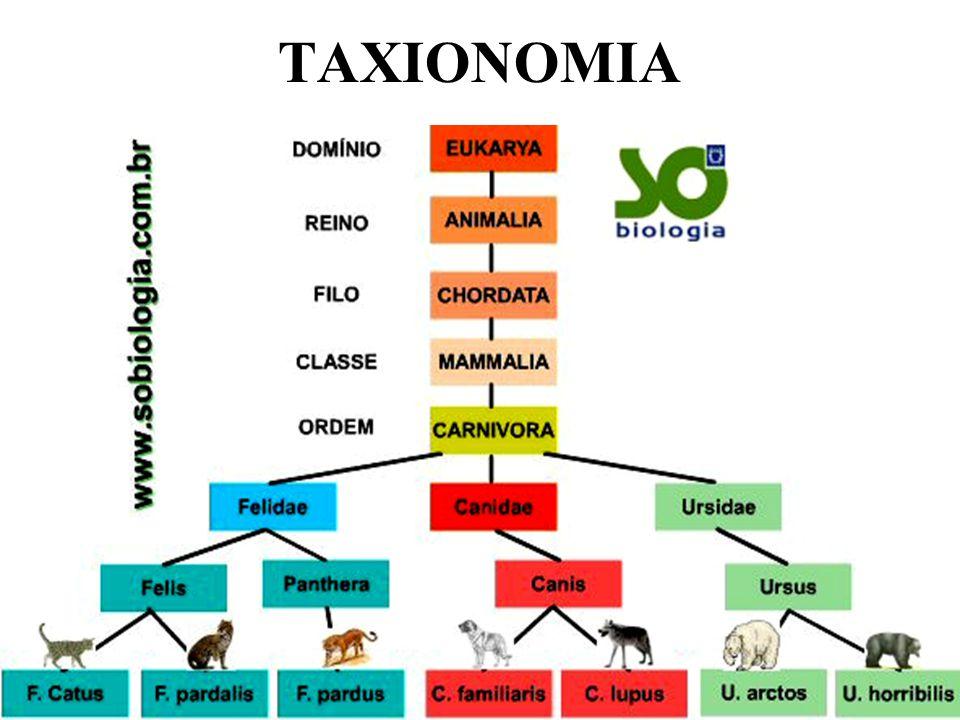 TAXIONOMIA