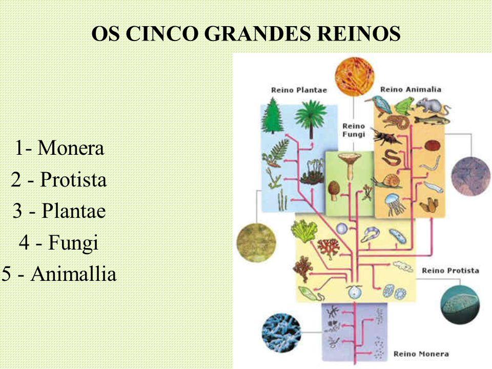 OS CINCO GRANDES REINOS 1- Monera 2 - Protista 3 - Plantae 4 - Fungi 5 - Animallia