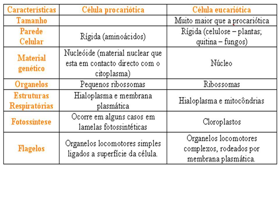 Classificação ESPÉCIE BIOLÓGICA = Categoria taxonômica mais básica da classificação.