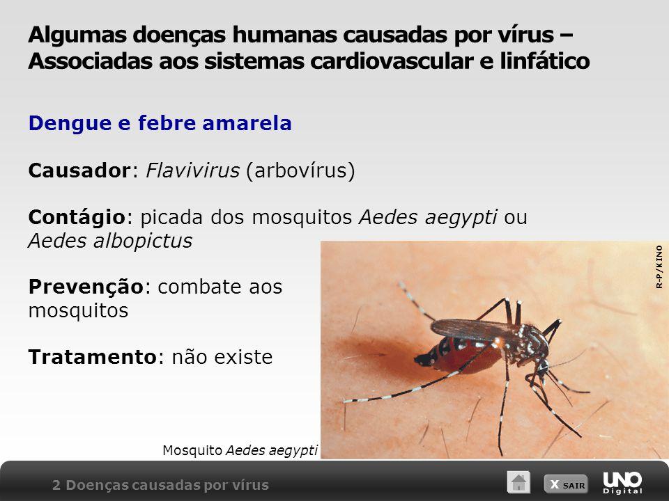 X SAIR Dengue e febre amarela Prevenção: combate aos mosquitos Tratamento: não existe 2 Doenças causadas por vírus Mosquito Aedes aegypti Causador: Fl