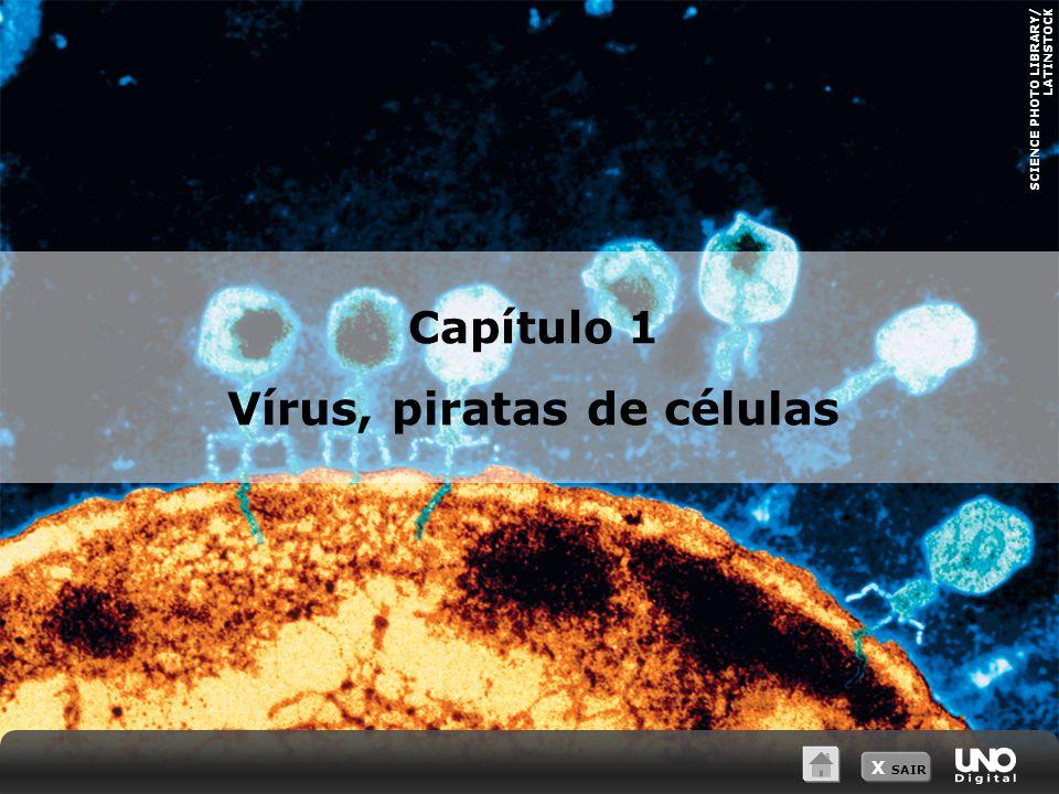 X SAIR Estrutura e reprodução dos vírus Características:  Acelulares  Sem metabolismo próprio  Reprodução só ocorre dentro de células.