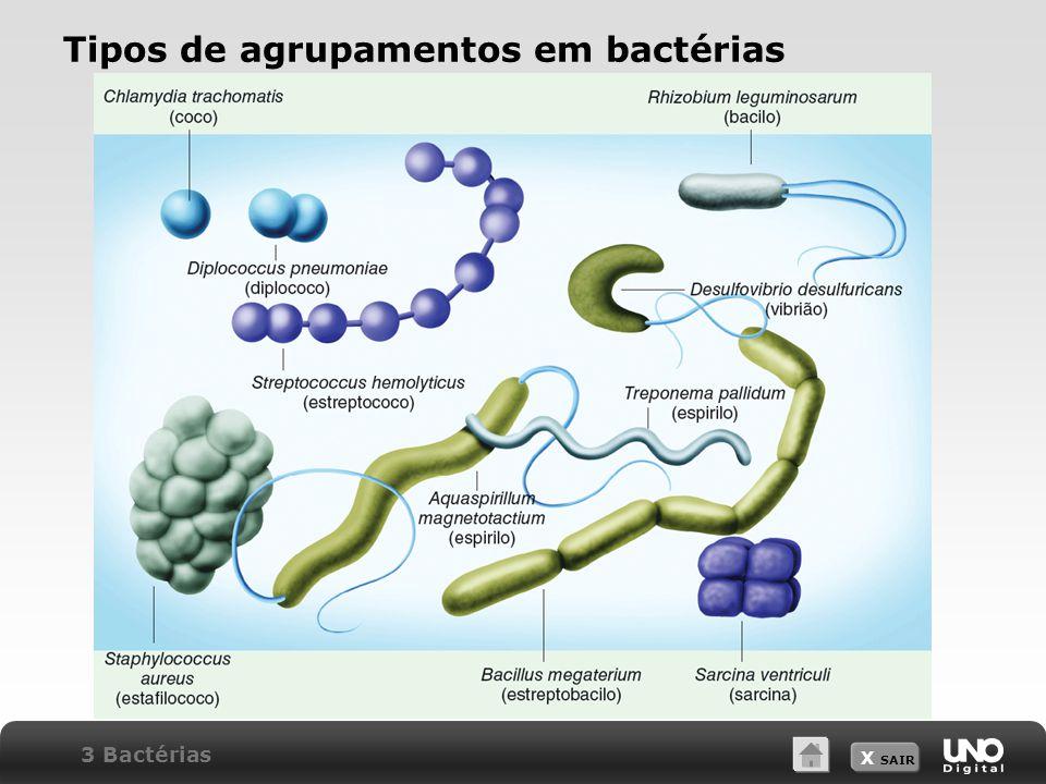 X SAIR Tipos de agrupamentos em bactérias 3 Bactérias