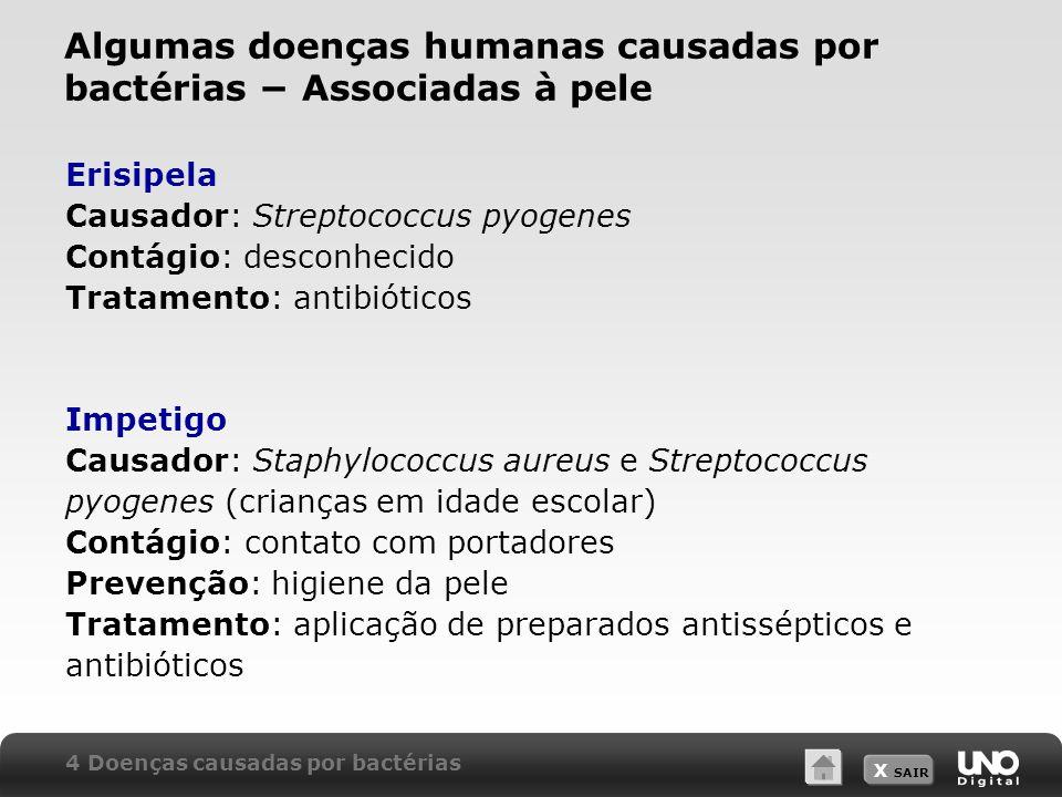 X SAIR Erisipela Causador: Streptococcus pyogenes Contágio: desconhecido Tratamento: antibióticos Impetigo Causador: Staphylococcus aureus e Streptoco