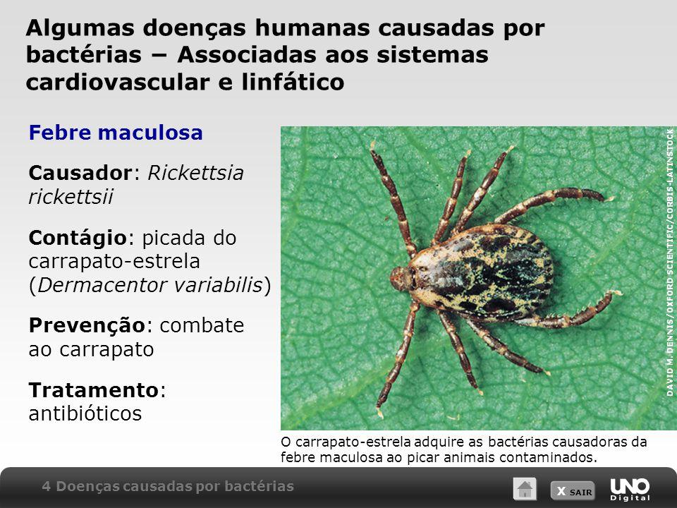 X SAIR Febre maculosa Causador: Rickettsia rickettsii Contágio: picada do carrapato-estrela (Dermacentor variabilis) Prevenção: combate ao carrapato T
