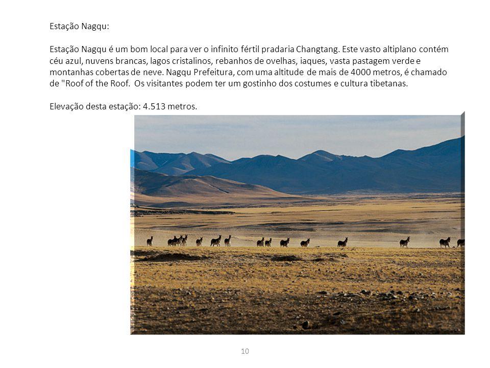 10 Estação Nagqu: Estação Nagqu é um bom local para ver o infinito fértil pradaria Changtang. Este vasto altiplano contém céu azul, nuvens brancas, la