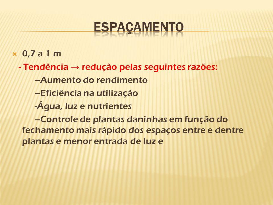  0,7 a 1 m - Tendência → redução pelas seguintes razões: –Aumento do rendimento –Eficiência na utilização -Água, luz e nutrientes –Controle de planta