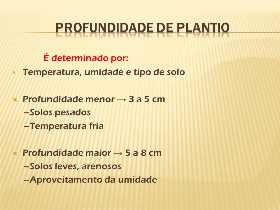 É determinado por:  Temperatura, umidade e tipo de solo  Profundidade menor → 3 a 5 cm –Solos pesados –Temperatura fria  Profundidade maior → 5 a 8