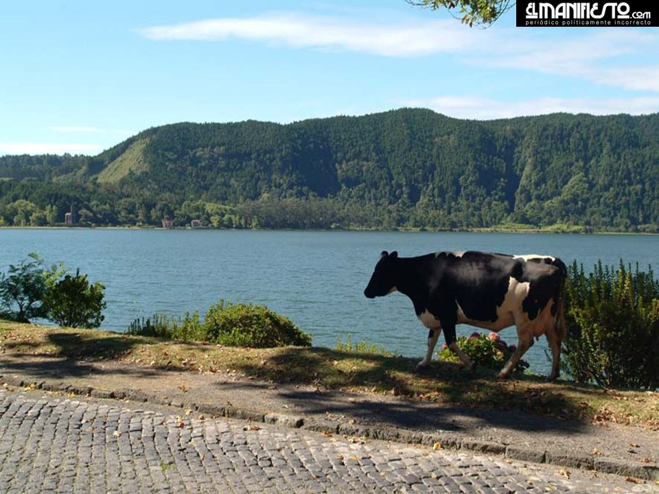 Lagoa das Furnas – Lago Verde.
