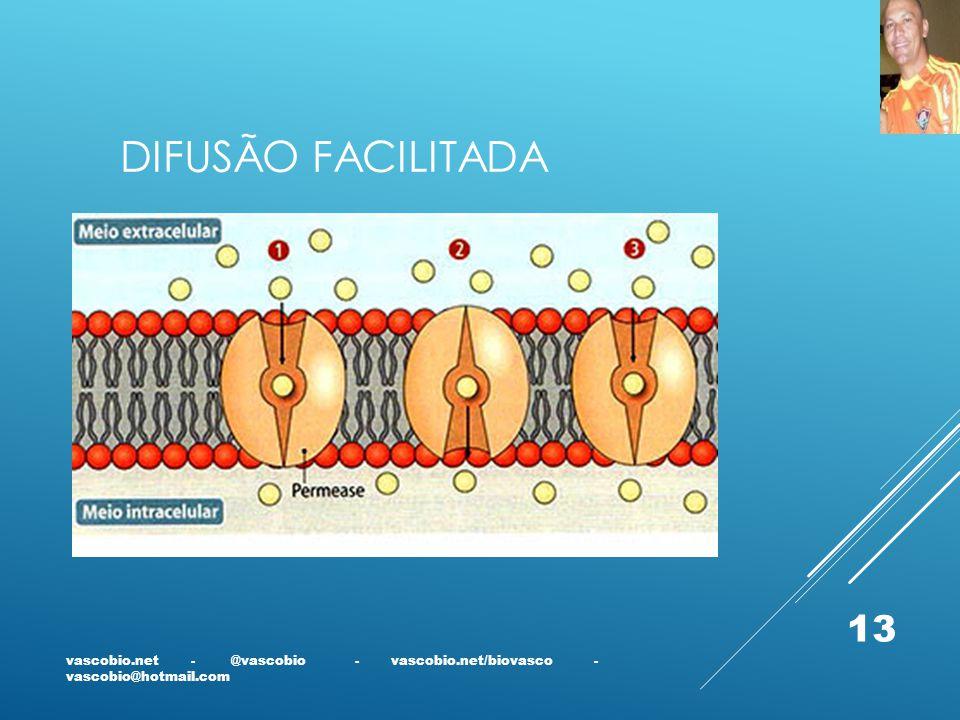 DIFUSÃO FACILITADA vascobio.net - @vascobio - vascobio.net/biovasco - vascobio@hotmail.com 13