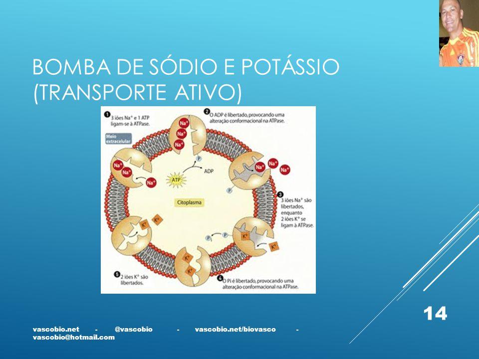 BOMBA DE SÓDIO E POTÁSSIO (TRANSPORTE ATIVO) vascobio.net - @vascobio - vascobio.net/biovasco - vascobio@hotmail.com 14