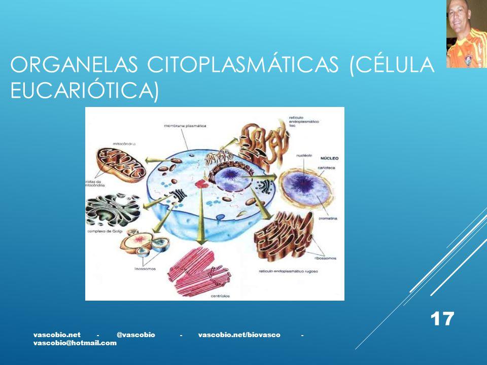 ORGANELAS CITOPLASMÁTICAS (CÉLULA EUCARIÓTICA) vascobio.net - @vascobio - vascobio.net/biovasco - vascobio@hotmail.com 17