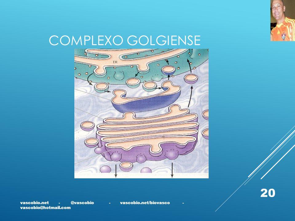 COMPLEXO GOLGIENSE vascobio.net - @vascobio - vascobio.net/biovasco - vascobio@hotmail.com 20