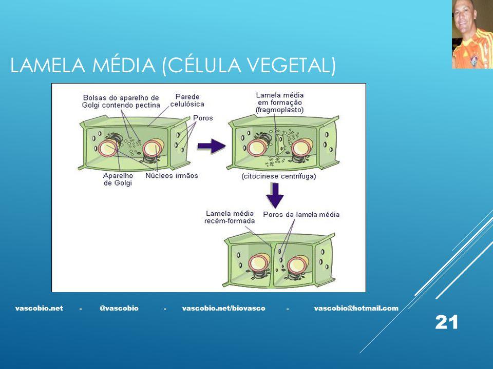 LAMELA MÉDIA (CÉLULA VEGETAL) vascobio.net - @vascobio - vascobio.net/biovasco - vascobio@hotmail.com 21