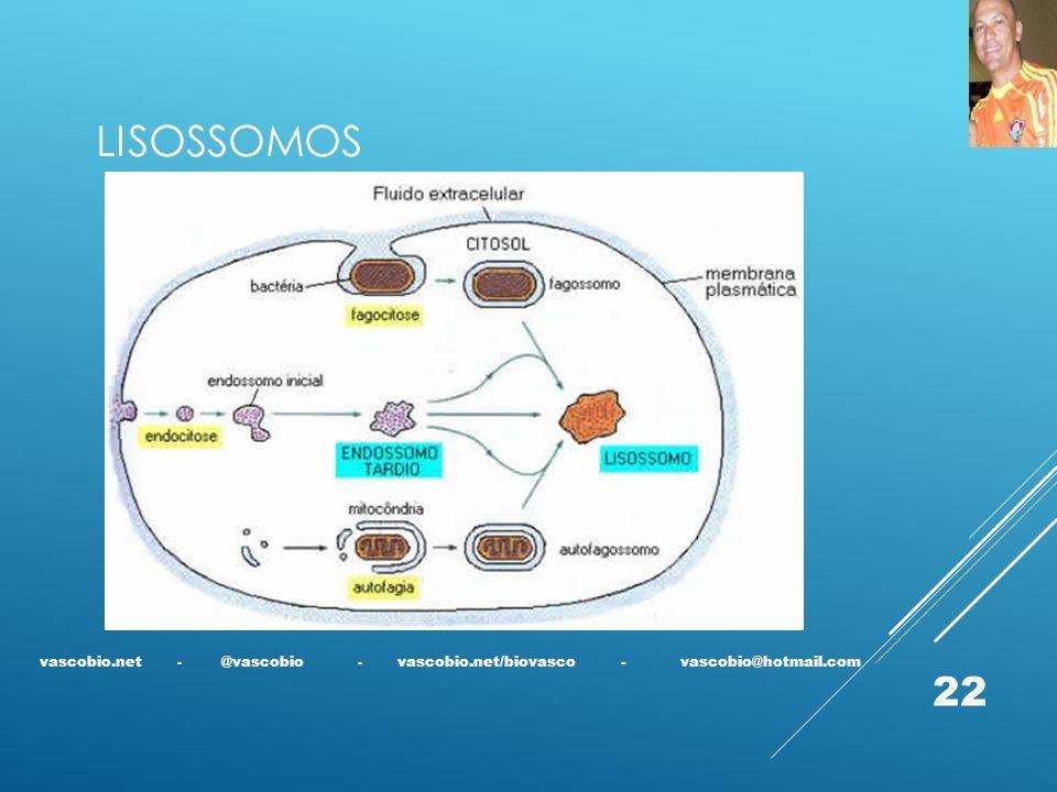 LISOSSOMOS vascobio.net - @vascobio - vascobio.net/biovasco - vascobio@hotmail.com 22