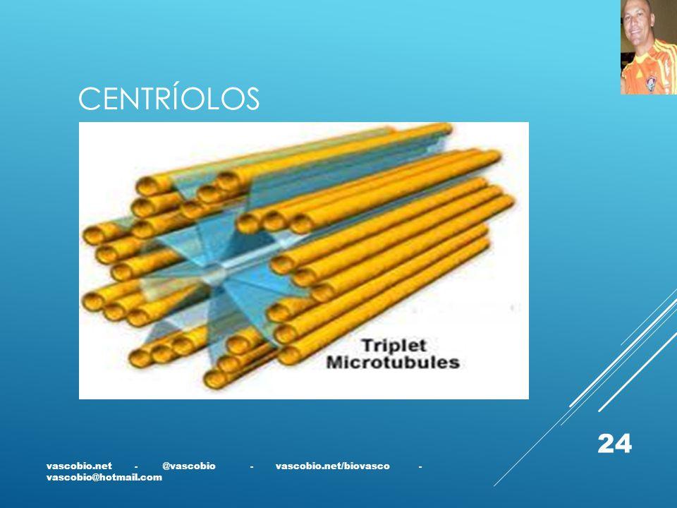 CENTRÍOLOS vascobio.net - @vascobio - vascobio.net/biovasco - vascobio@hotmail.com 24
