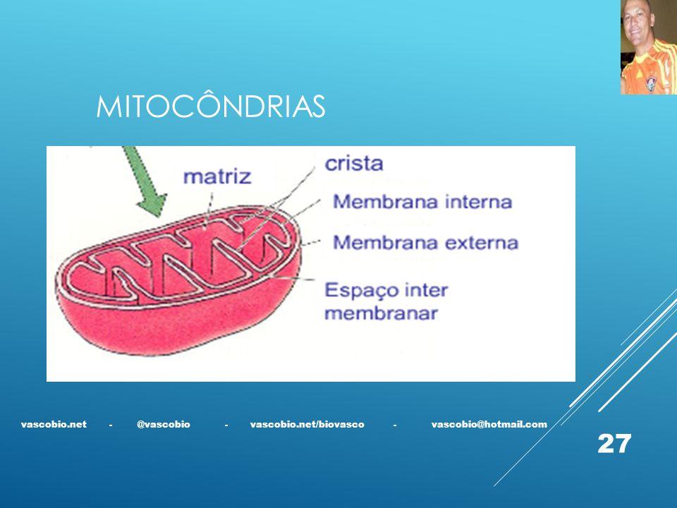 MITOCÔNDRIAS vascobio.net - @vascobio - vascobio.net/biovasco - vascobio@hotmail.com 27