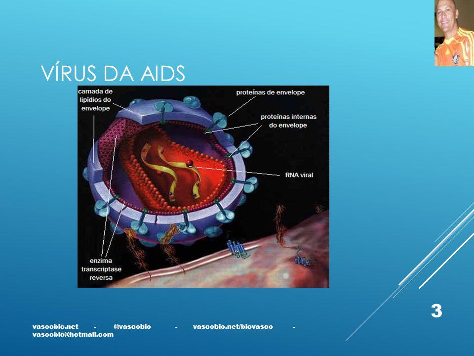 VÍRUS DA AIDS vascobio.net - @vascobio - vascobio.net/biovasco - vascobio@hotmail.com 3
