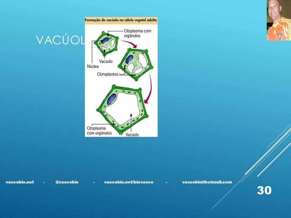 VACÚOLO vascobio.net - @vascobio - vascobio.net/biovasco - vascobio@hotmail.com 30