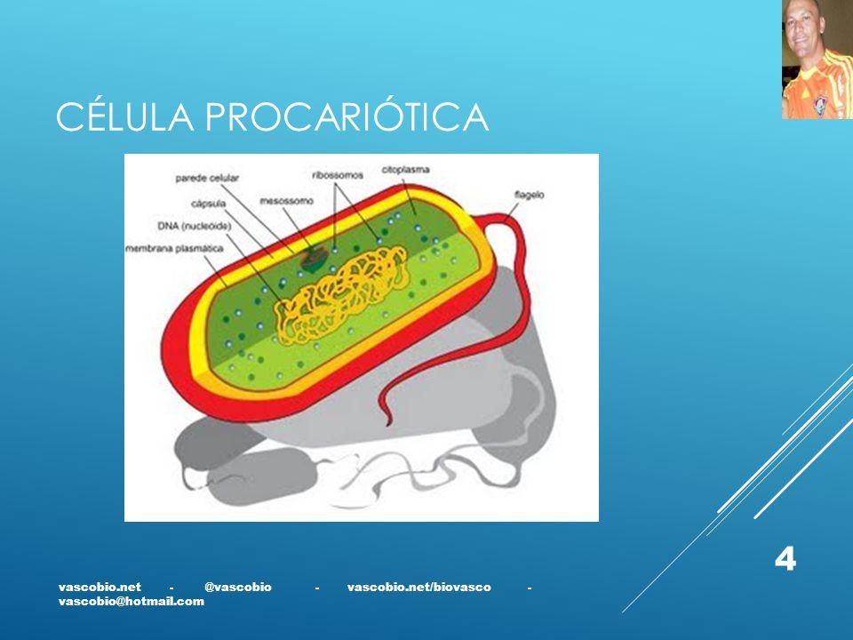 CÉLULA PROCARIÓTICA vascobio.net - @vascobio - vascobio.net/biovasco - vascobio@hotmail.com 4