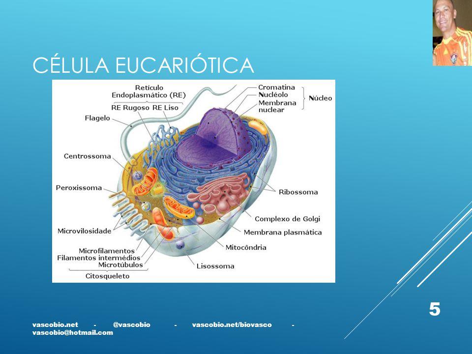 CÉLULA EUCARIÓTICA vascobio.net - @vascobio - vascobio.net/biovasco - vascobio@hotmail.com 5