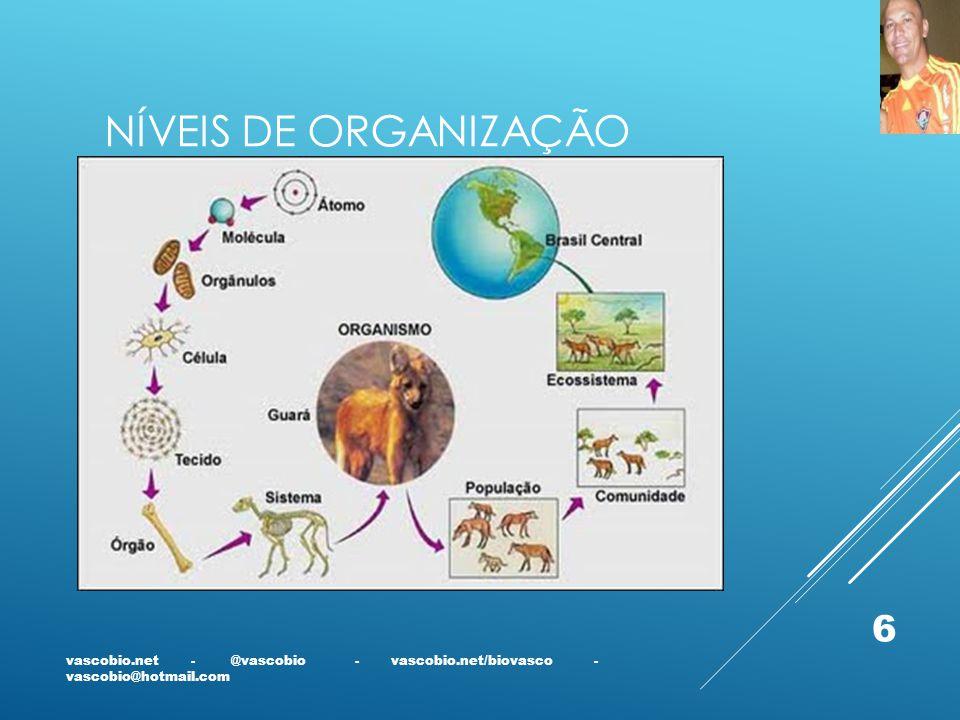 NÍVEIS DE ORGANIZAÇÃO vascobio.net - @vascobio - vascobio.net/biovasco - vascobio@hotmail.com 6