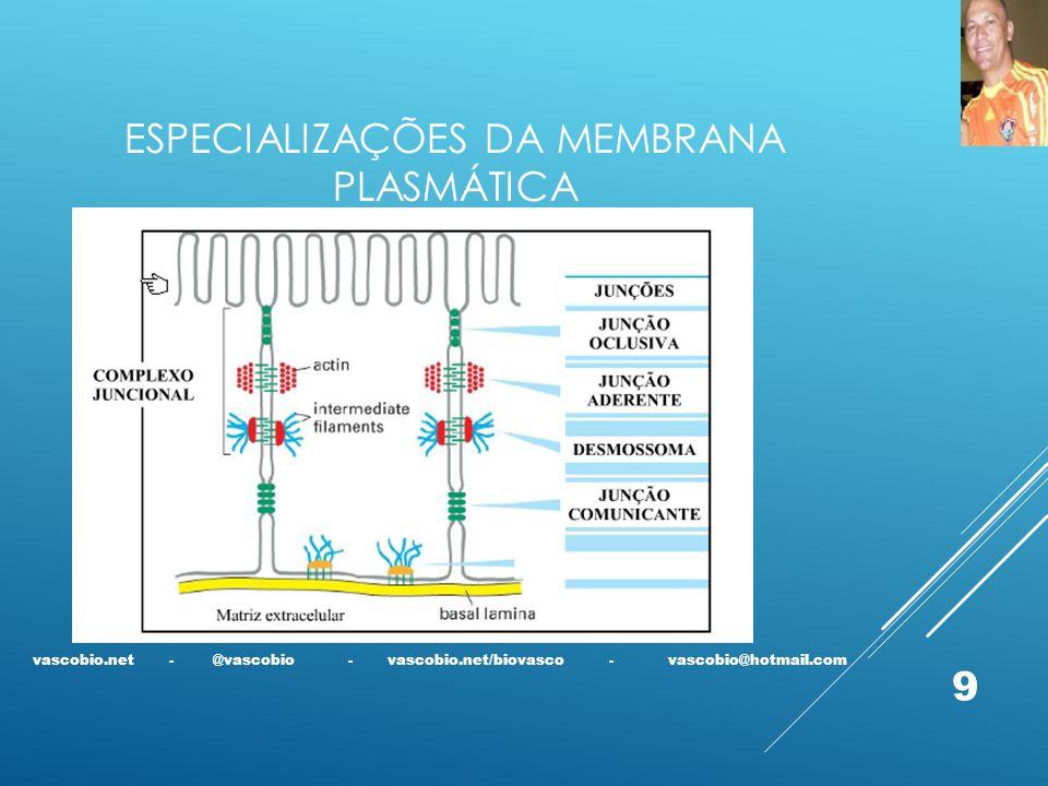 ESPECIALIZAÇÕES DA MEMBRANA PLASMÁTICA vascobio.net - @vascobio - vascobio.net/biovasco - vascobio@hotmail.com 9