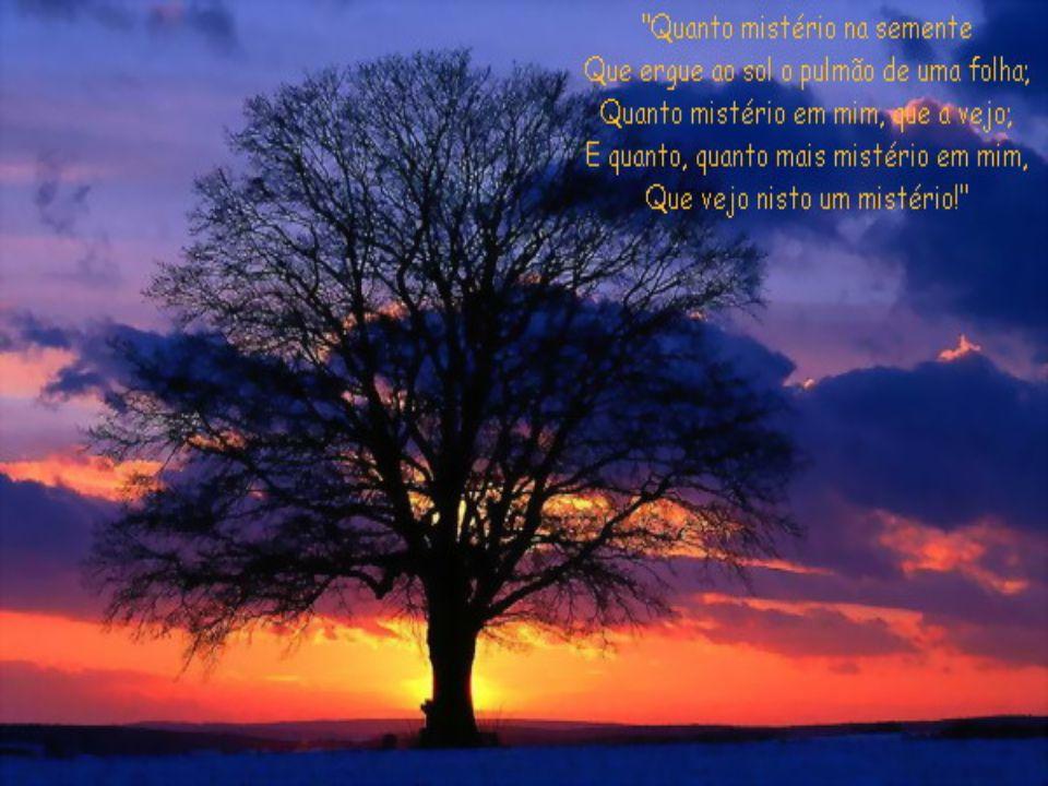 """""""A terra boa semeada é aquele que ouve a palavra e a compreende, e produz fruto: cem por um, sessenta por um, trinta por um""""(Mt 13,23)"""