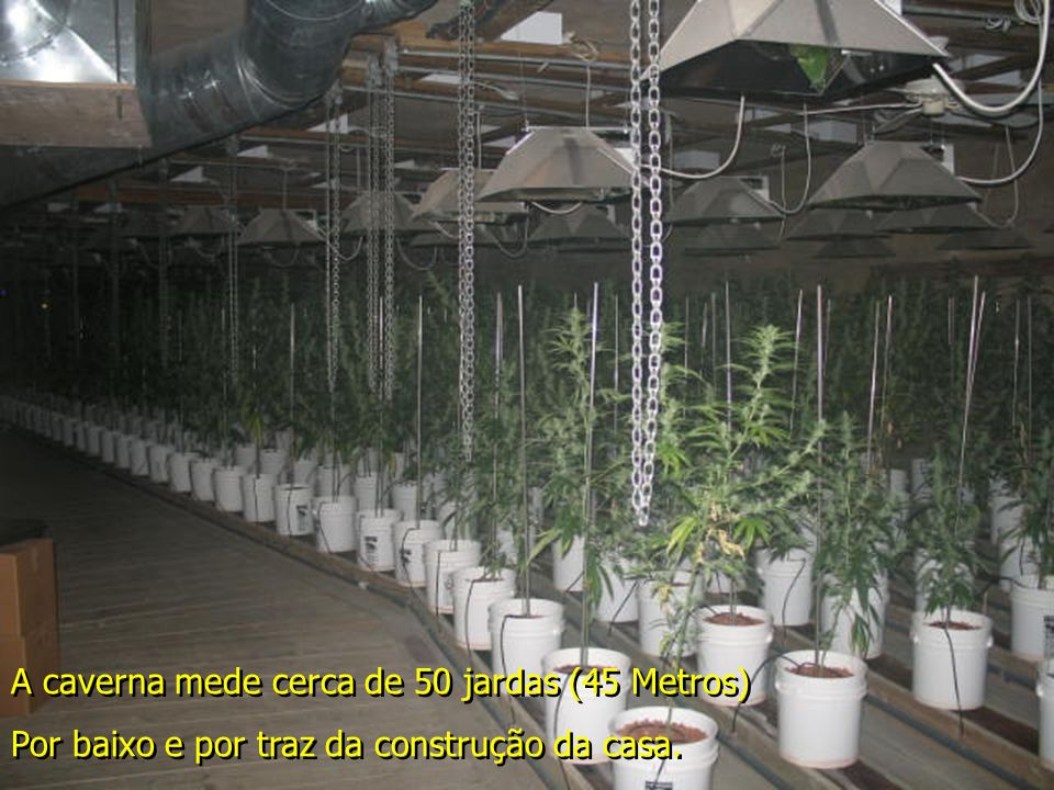 Equipamento de Irrigação Uma elaborado plantação de Maconha crescendo, em todas as etapas. Iluminação de efeito solar.