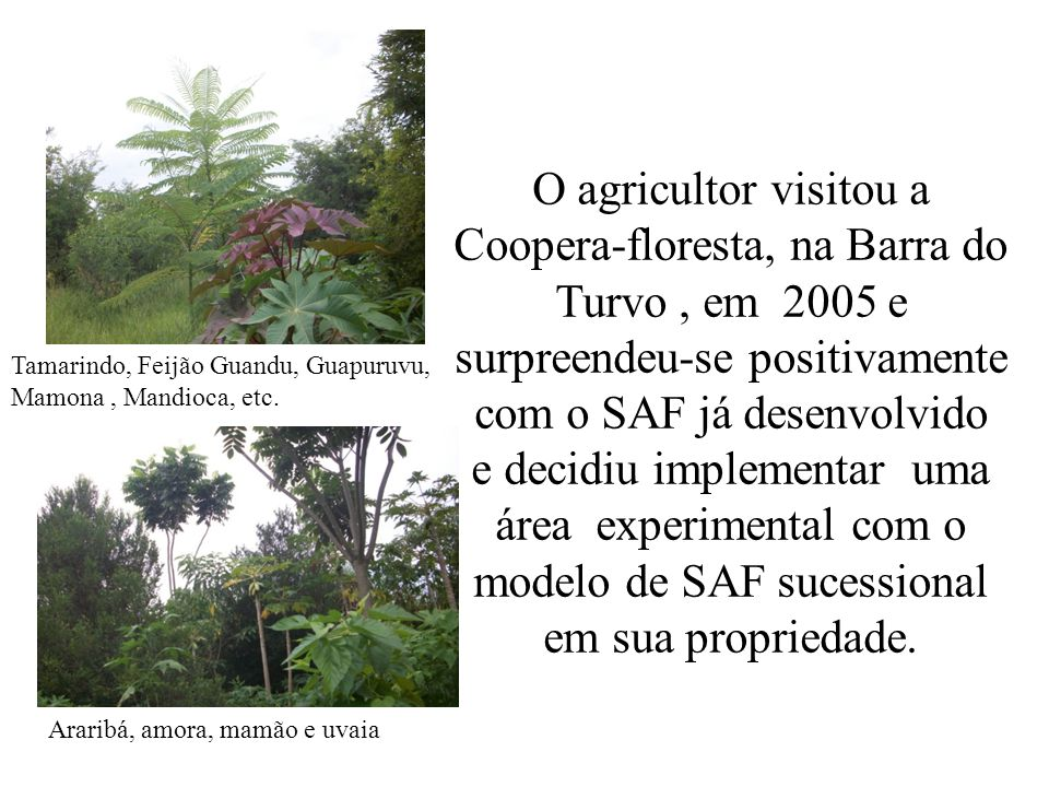 O agricultor visitou a Coopera-floresta, na Barra do Turvo, em 2005 e surpreendeu-se positivamente com o SAF já desenvolvido e decidiu implementar uma
