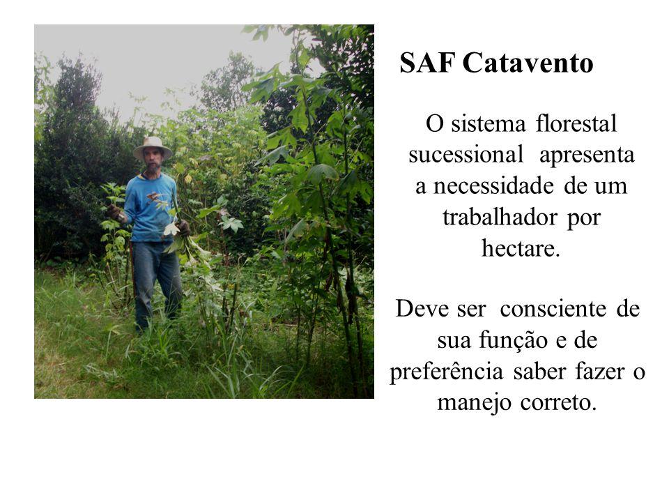 SAF Catavento O sistema florestal sucessional apresenta a necessidade de um trabalhador por hectare. Deve ser consciente de sua função e de preferênci