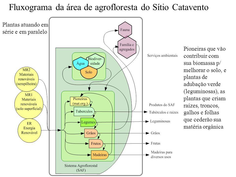Fluxograma da área de agrofloresta do Sítio Catavento Plantas atuando em série e em paralelo Pioneiras que vão contribuir com sua biomassa p/ melhorar